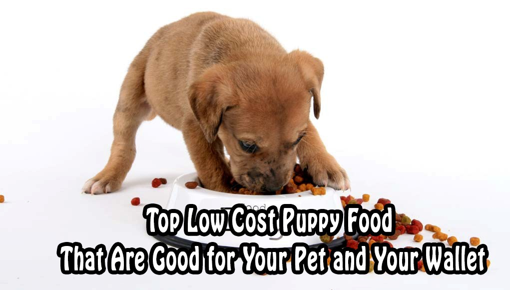 top low cost puppy food that are good for your pets and your wallet too
