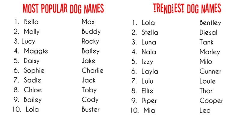 You Might Be Naming Your Dog The Wrong Way Check These 10 Methods