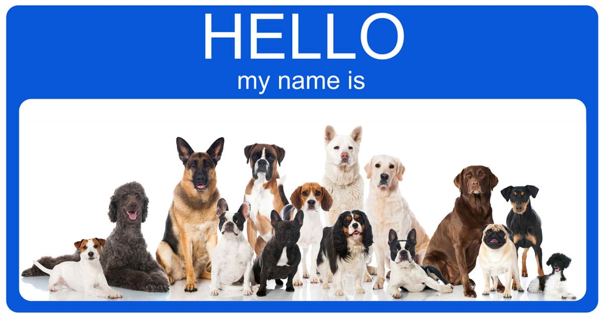 You Might Be Naming Your Dog The Wrong Way Check These 10 Methods For Unique Puppy Names For Boys Behind Nordic Water